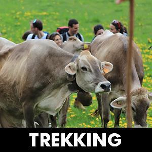 TREKKING_300
